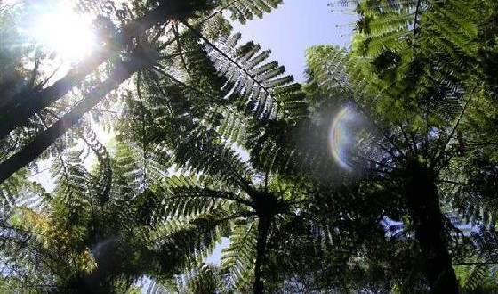 1213109-Native_New_Zealand_bush-New_Zealand-560x330